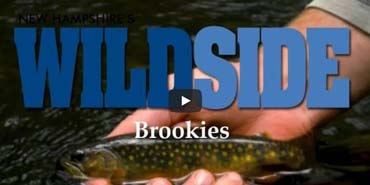 Brookies