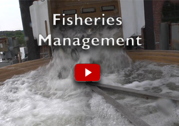 NH Fisheries Management