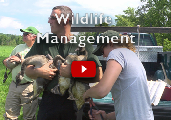 NH Wildlife Management
